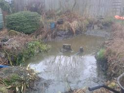 Dirty old pond and overgrowth in moseley